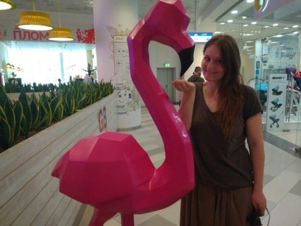 Кормление фламинго